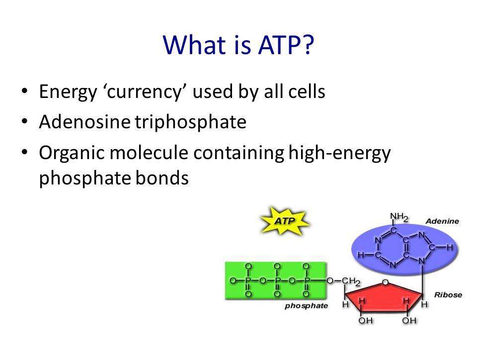 What is ATP Energy 'currency' used by all cells