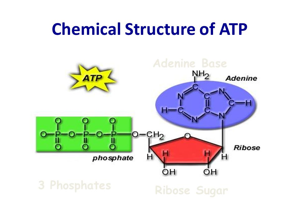 Chemical Structure of ATP