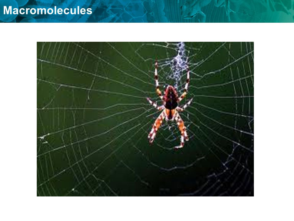 A spider web can stop an insict from flying