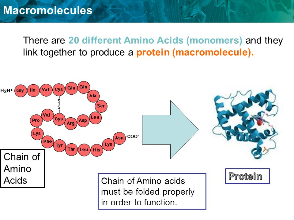 There are 20 different Amino Acids (monomers) and they link together to produce a protein (macromolecule).