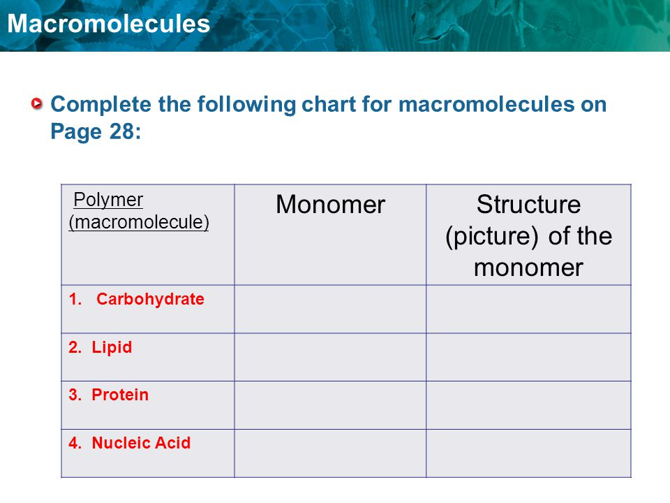 Complete the following chart for macromolecules on Page 28: