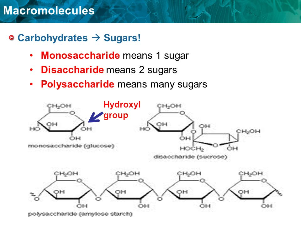 Carbohydrates  Sugars!