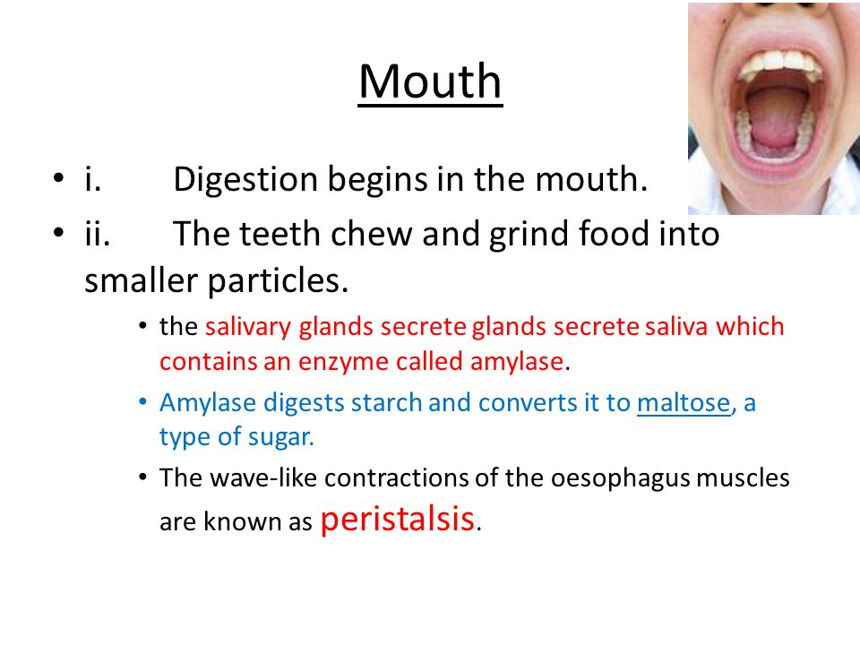 Mouth i. Digestion begins in the mouth.