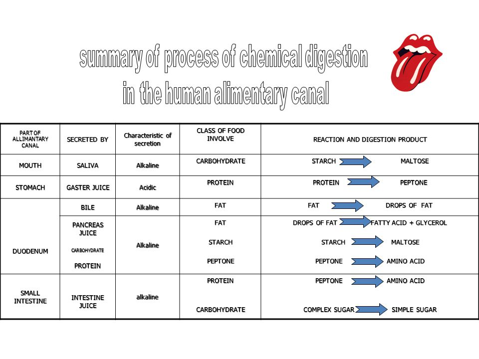 summary of process of chemical digestion in the human alimentary canal