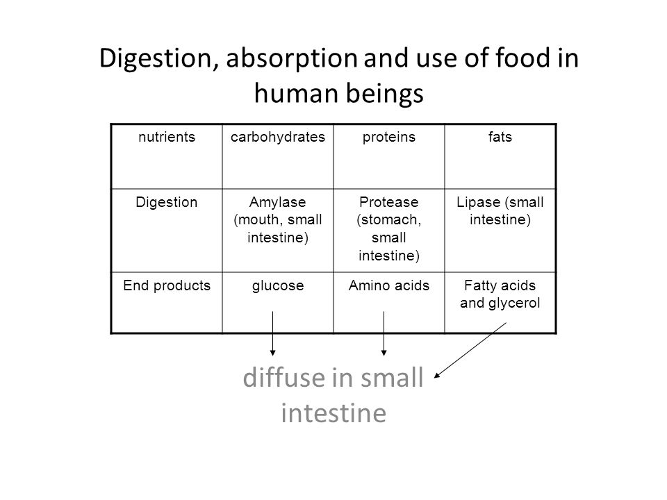Digestion, absorption and use of food in human beings