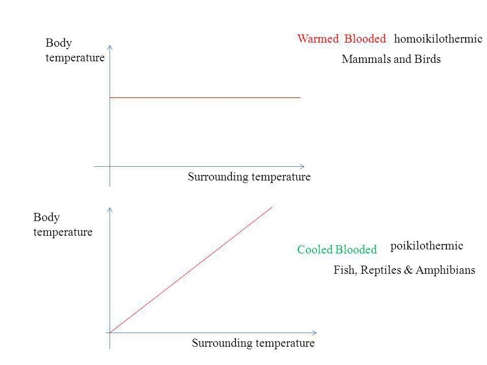 Warmed Blooded homoikilothermic. Body. temperature. Mammals and Birds. Surrounding temperature.