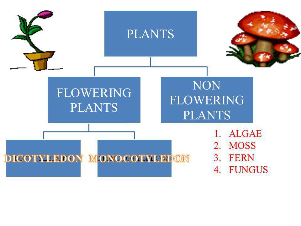 PLANTS NON FLOWERING FLOWERING ALGAE MOSS FERN FUNGUS DICOTYLEDON