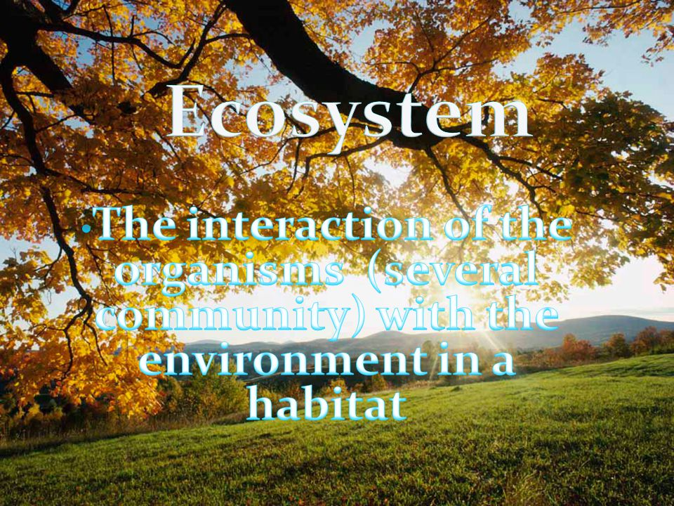 Ecosystem The interaction of the organisms (several community) with the environment in a habitat.