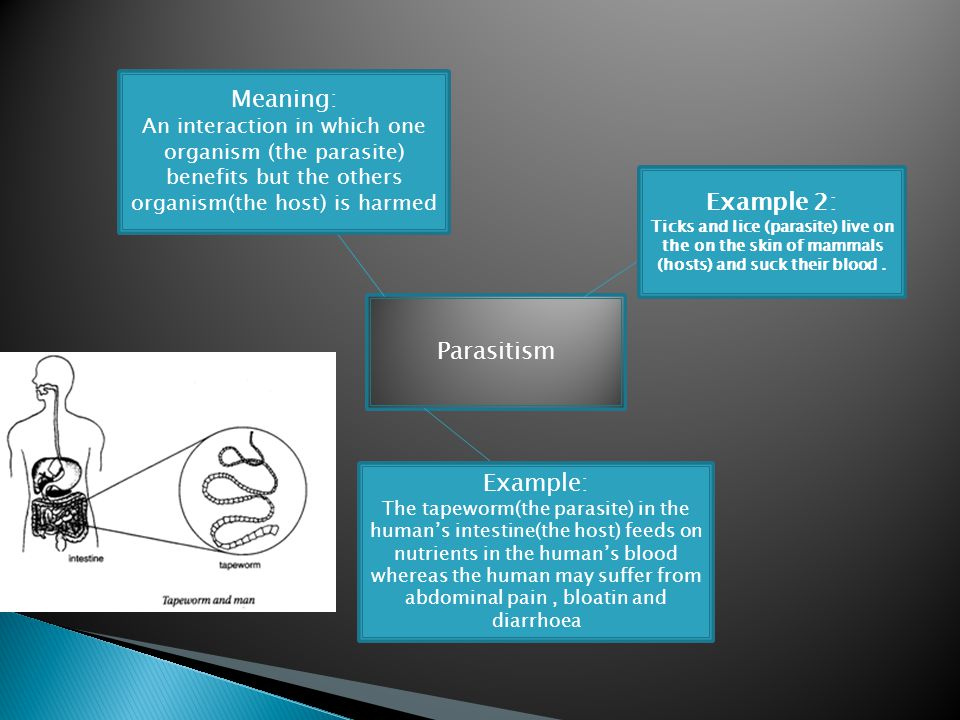 Meaning: Example 2: Parasitism Example: