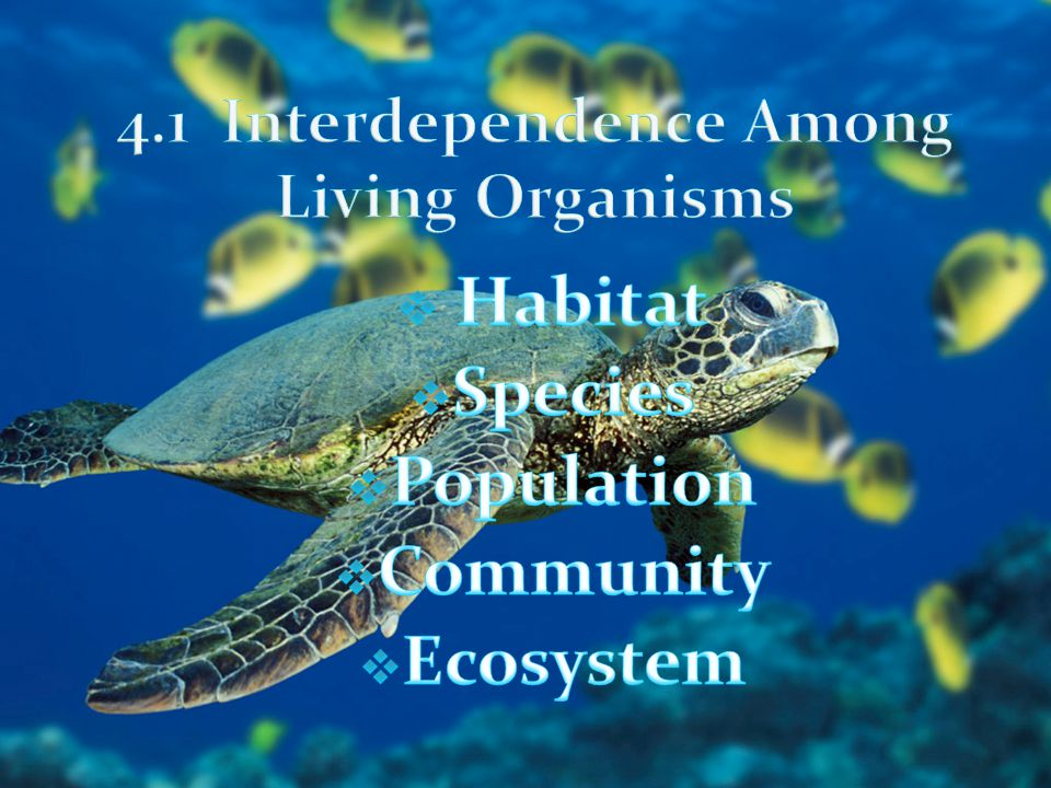 4.1 Interdependence Among Living Organisms