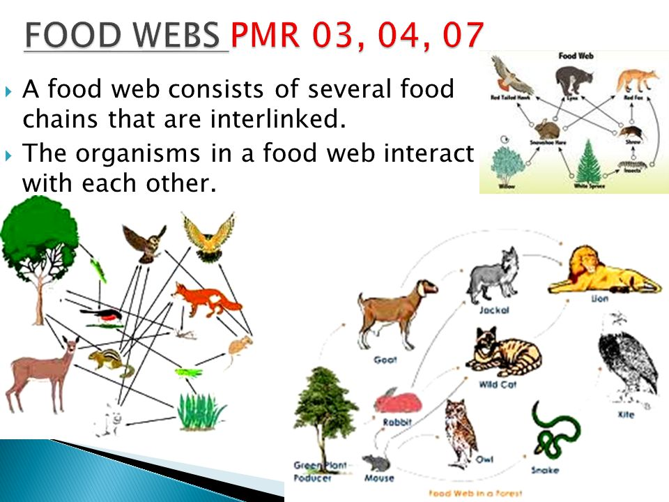 FOOD WEBS PMR 03, 04, 07 A food web consists of several food chains that are interlinked.