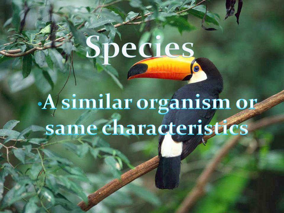 A similar organism or same characteristics