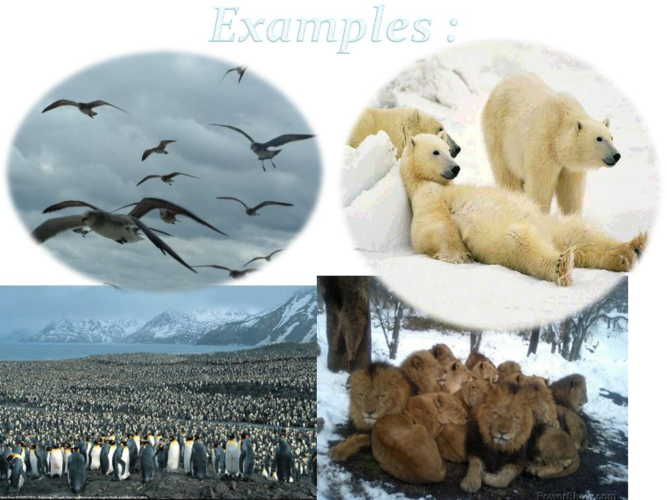 Examples :