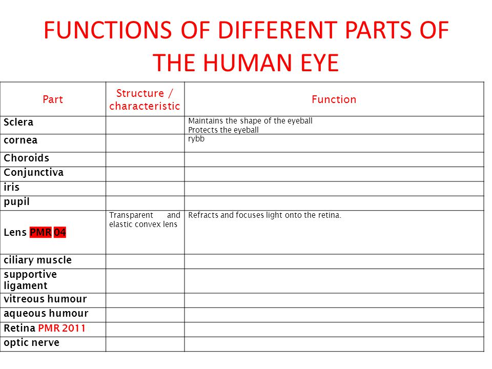 FUNCTIONS OF DIFFERENT PARTS OF THE HUMAN EYE