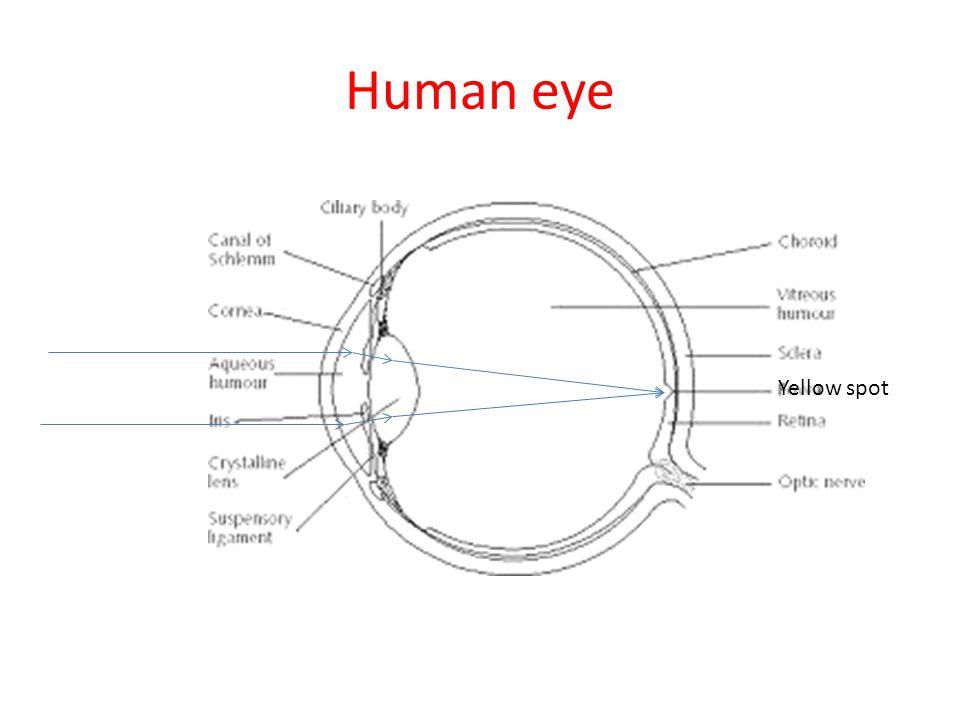 Human eye Yellow spot