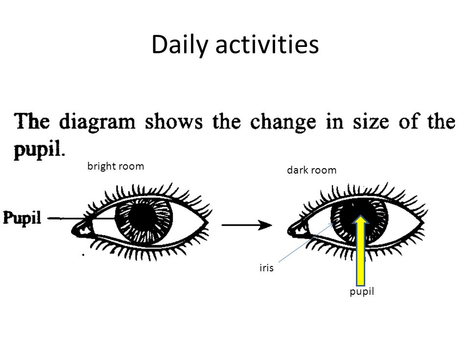 Daily activities bright room dark room iris pupil