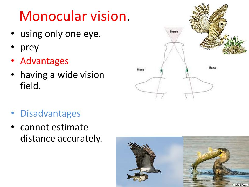 Monocular vision. using only one eye. prey Advantages