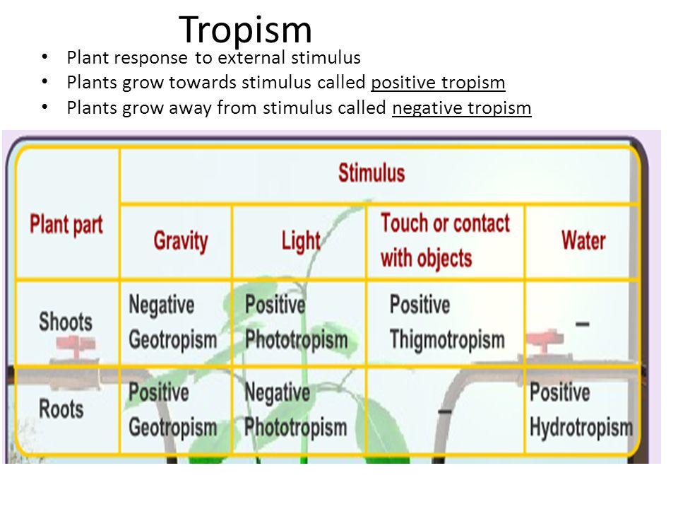 Tropism Plant response to external stimulus