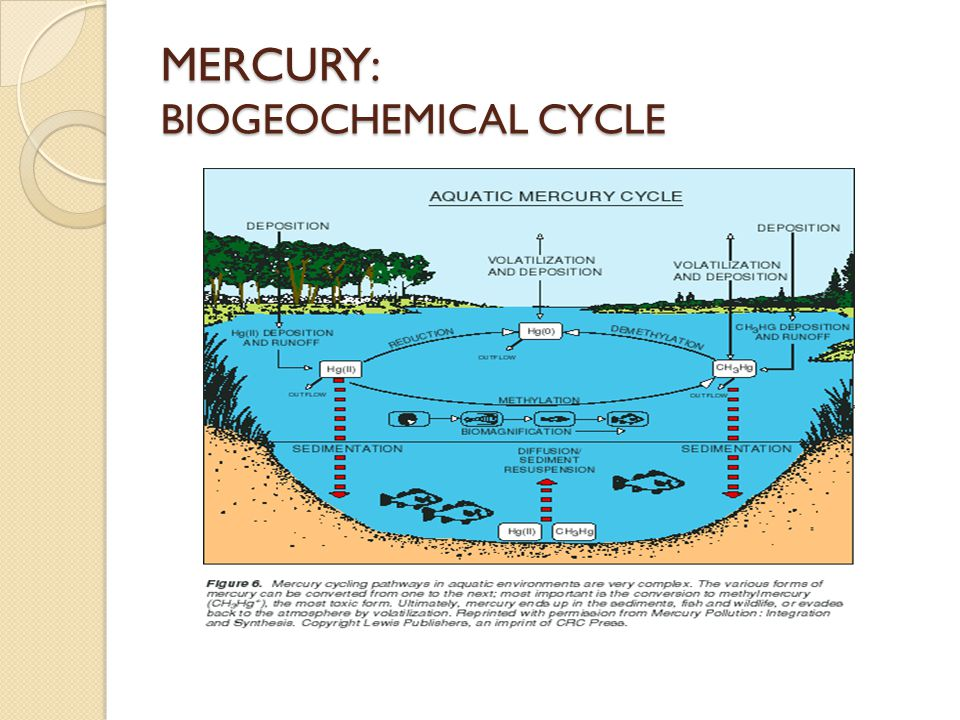 MERCURY: BIOGEOCHEMICAL CYCLE