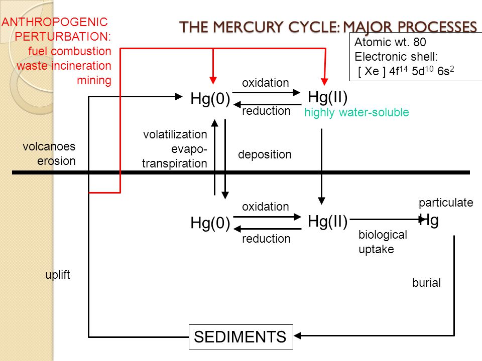 THE MERCURY CYCLE: MAJOR PROCESSES