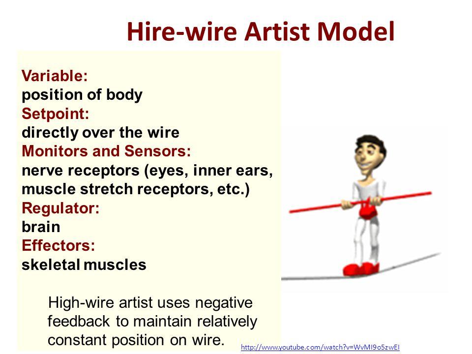 Hire-wire Artist Model