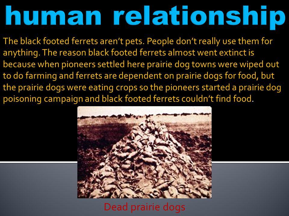 human relationship Dead prairie dogs