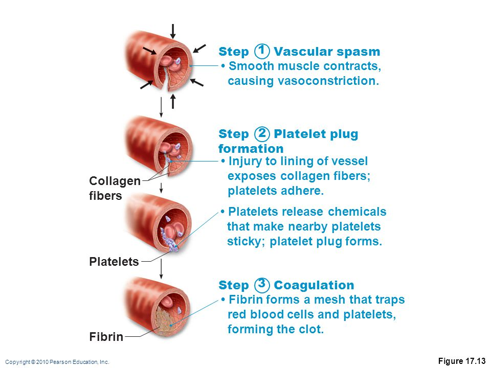 • Smooth muscle contracts, causing vasoconstriction.