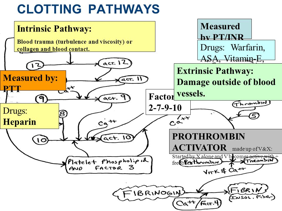 CLOTTING PATHWAYS Measured by PT/INR Intrinsic Pathway: