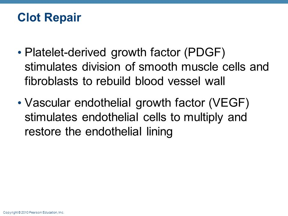 Clot Repair Platelet-derived growth factor (PDGF) stimulates division of smooth muscle cells and fibroblasts to rebuild blood vessel wall.