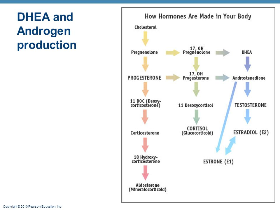 DHEA and Androgen production