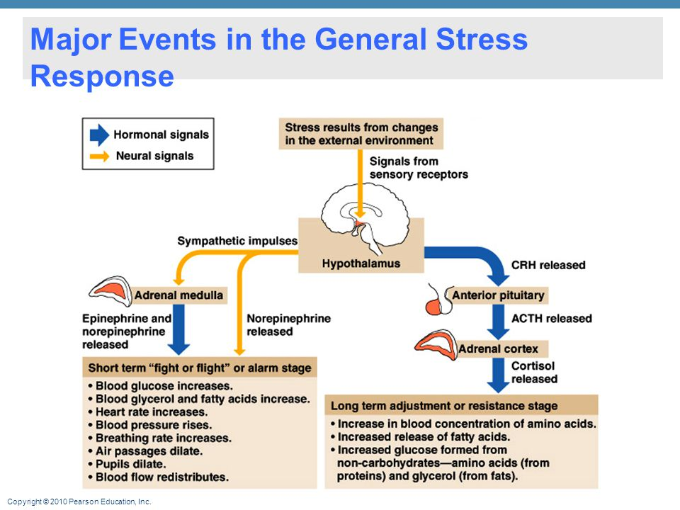 Major Events in the General Stress Response