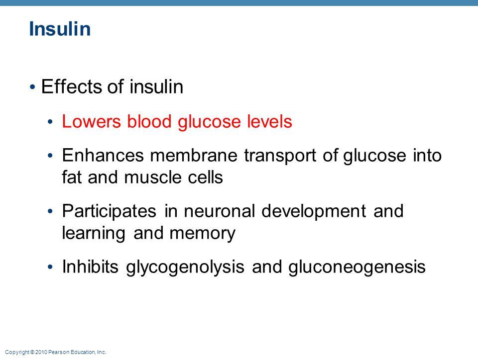 Insulin Effects of insulin Lowers blood glucose levels