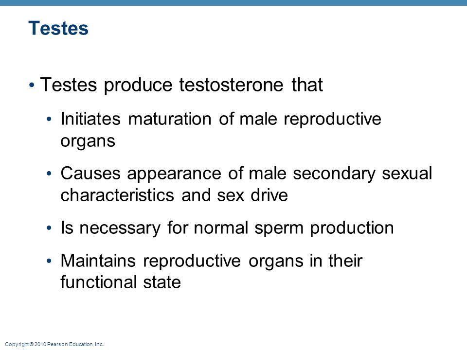 Testes produce testosterone that