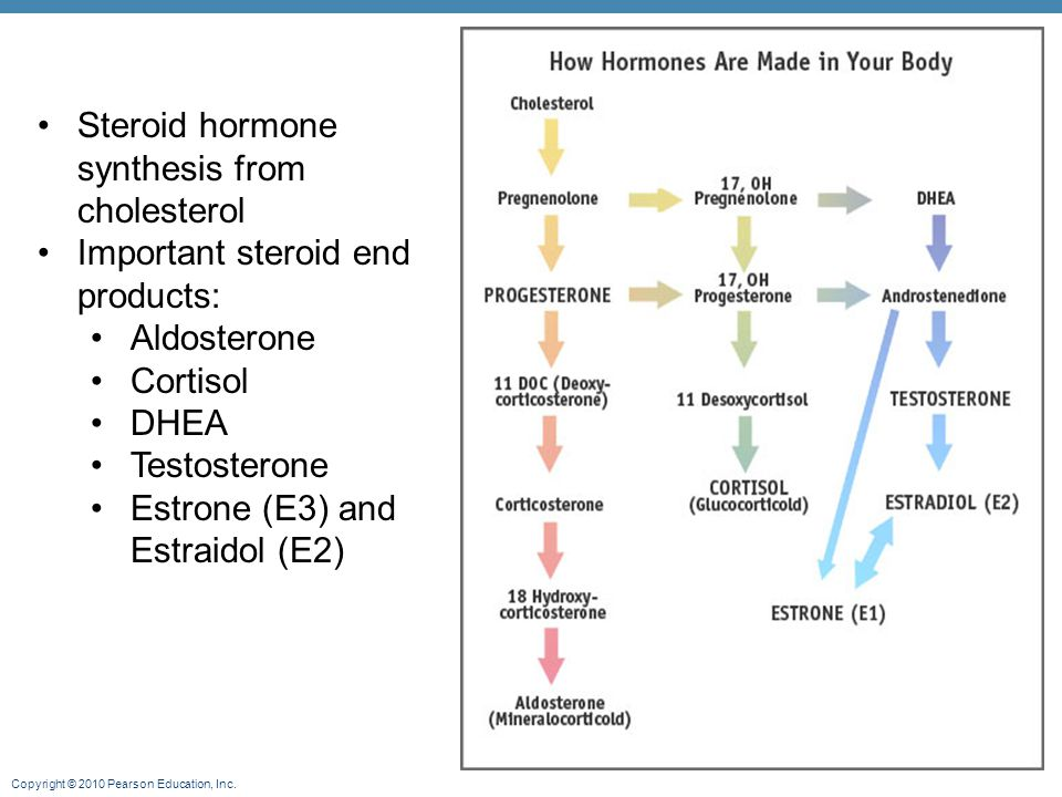 Steroid hormone synthesis from cholesterol