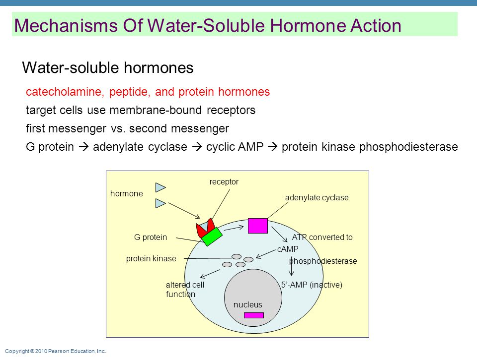 Mechanisms Of Water-Soluble Hormone Action