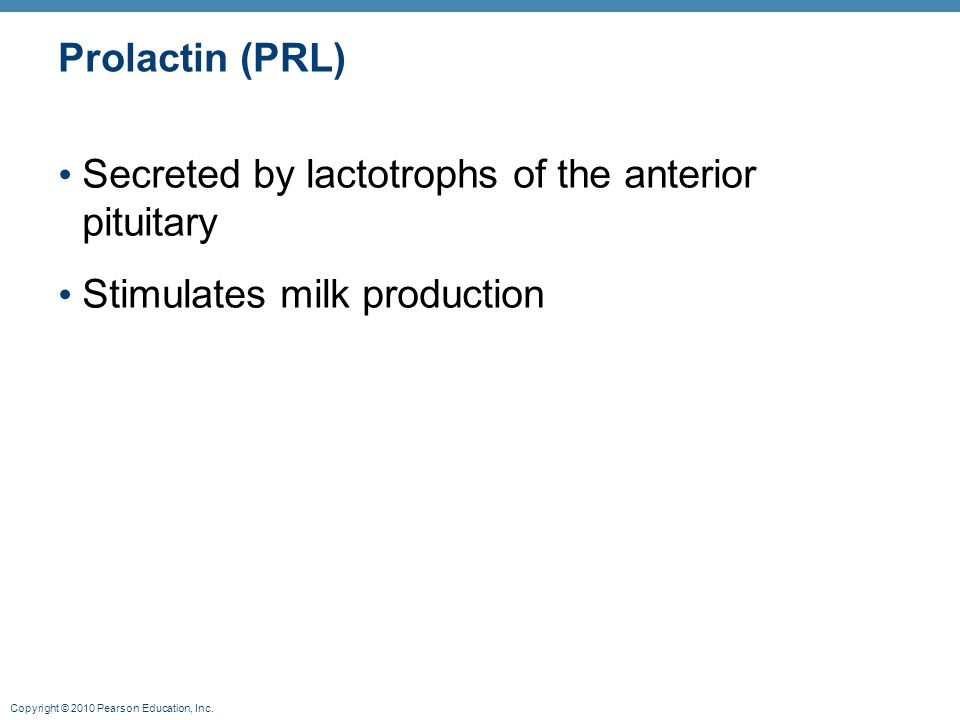 Prolactin (PRL) Secreted by lactotrophs of the anterior pituitary Stimulates milk production