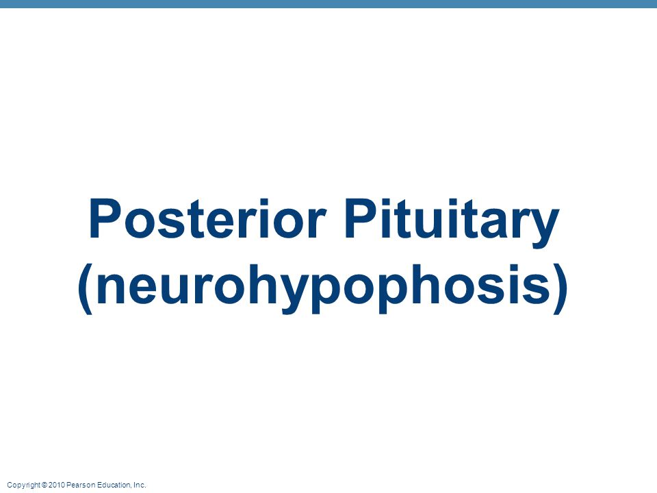 Posterior Pituitary (neurohypophosis)