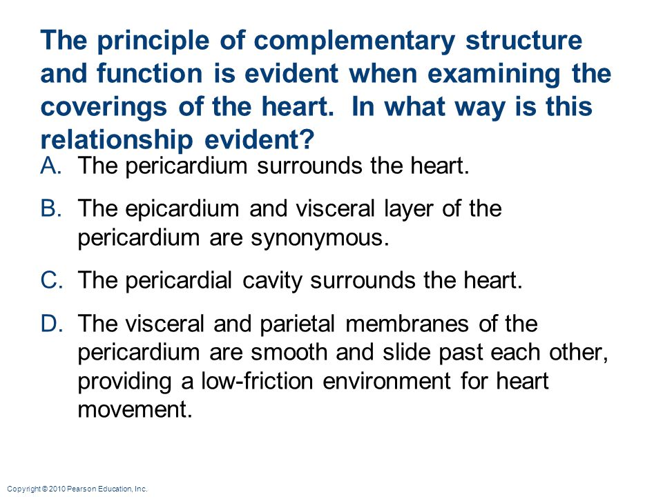 The principle of complementary structure and function is evident when examining the coverings of the heart. In what way is this relationship evident