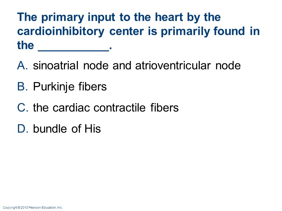 sinoatrial node and atrioventricular node Purkinje fibers