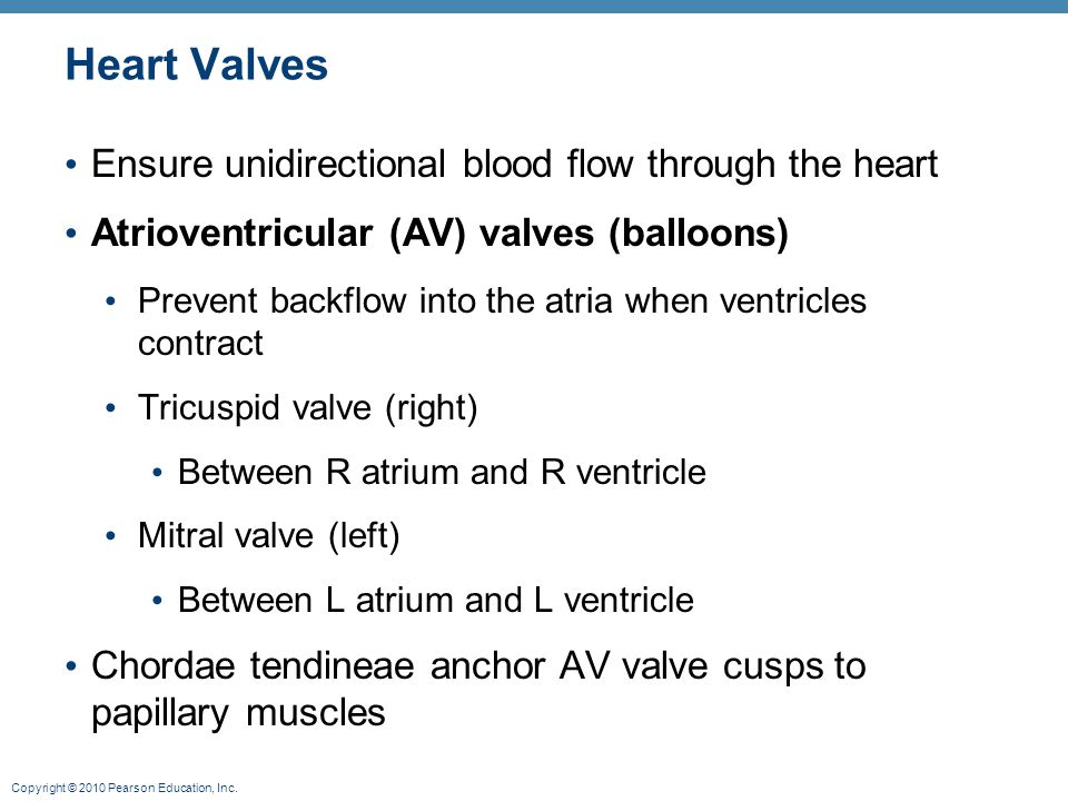 Heart Valves Ensure unidirectional blood flow through the heart