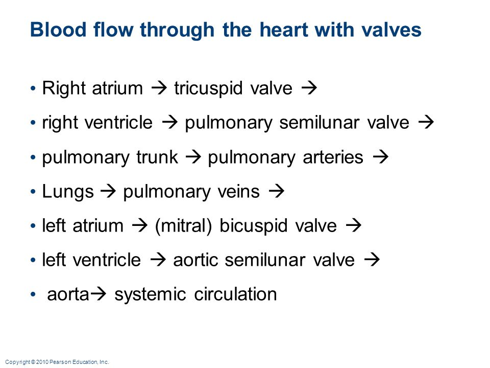 Blood flow through the heart with valves