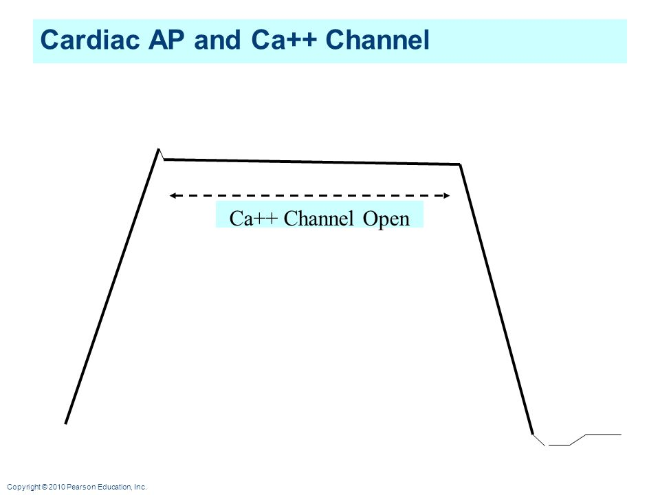 Cardiac AP and Ca++ Channel