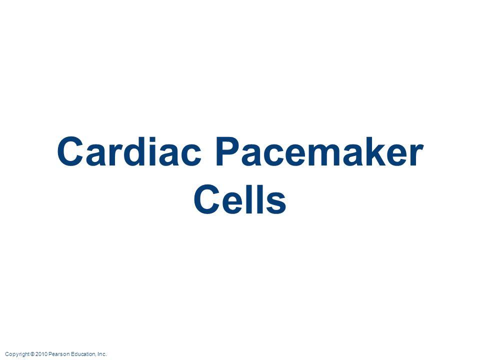 Cardiac Pacemaker Cells