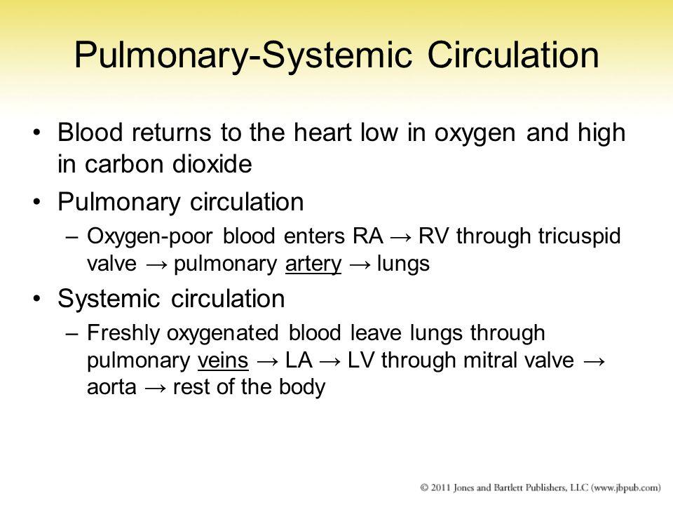 Pulmonary-Systemic Circulation