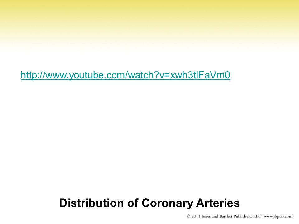 Distribution of Coronary Arteries