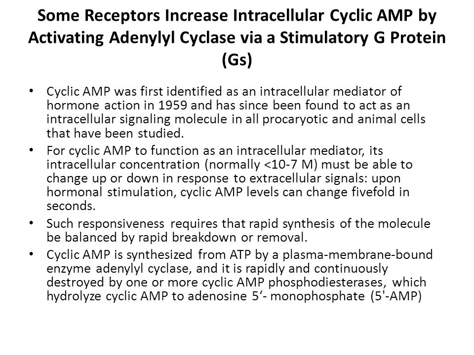 Some Receptors Increase Intracellular Cyclic AMP by Activating Adenylyl Cyclase via a Stimulatory G Protein (Gs)