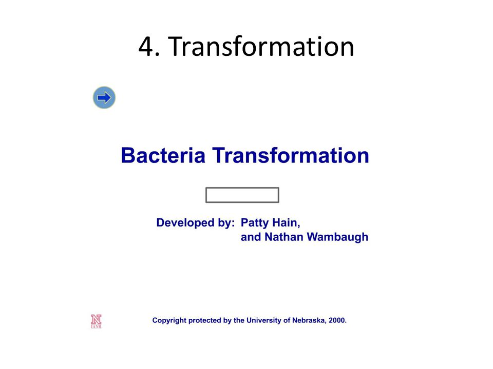 4. Transformation