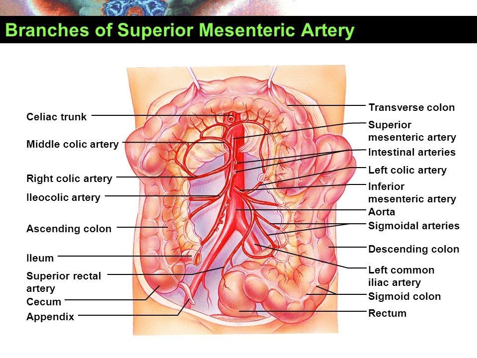 superior mesenteric vein and artery relationship