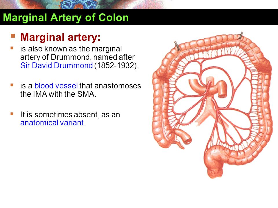 Marginal Artery of Colon