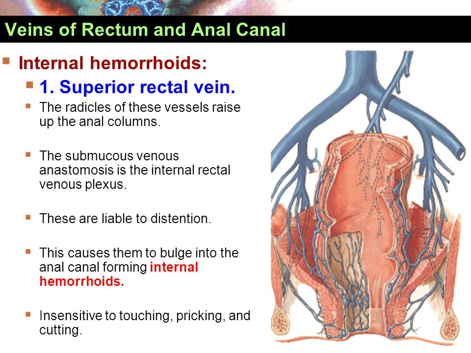 Veins of Rectum and Anal Canal